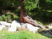 3_Baum_auf_Stein